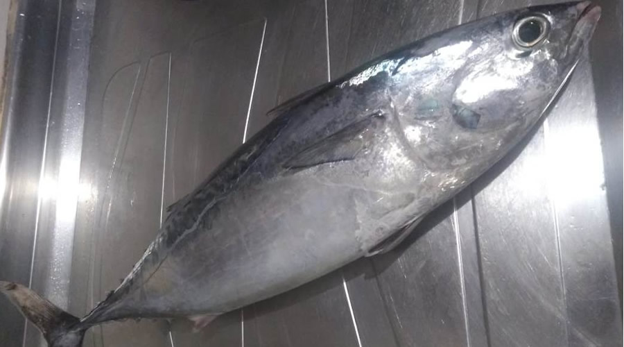 Monster Sushi - Pântano do Sul