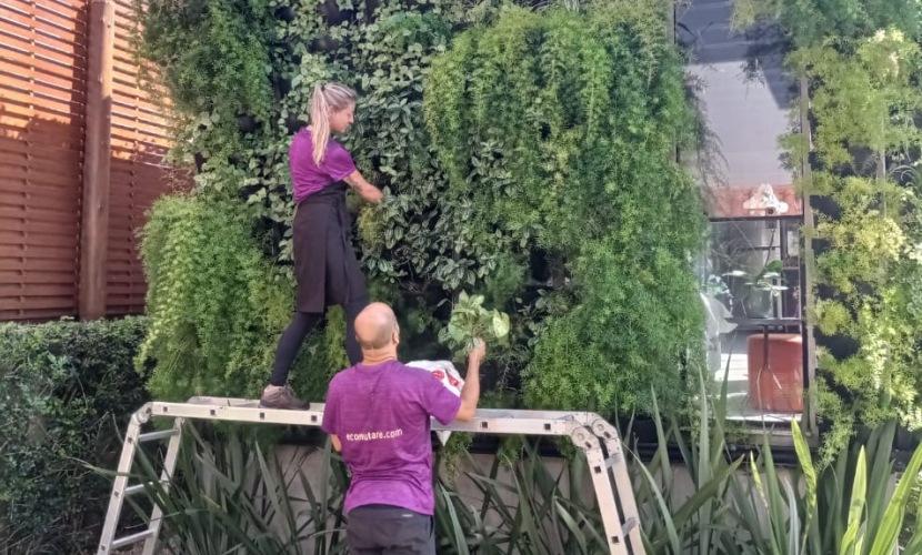 Eco Mutare - horta vertical