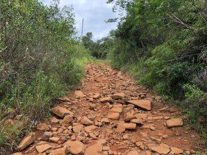 Trilha do Morro do Lampião, no Campeche 10