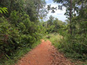 Trilha do Morro do Lampião, no Campeche 8