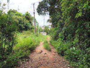 Trilha do Morro do Lampião, no Campeche 9