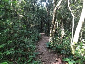 Trilha do Morro do Lampião, no Campeche 17