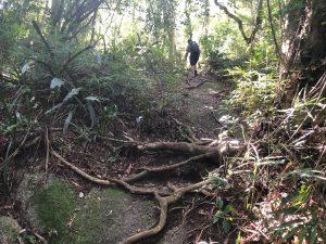 Trilha do Morro do Lampião, no Campeche 18
