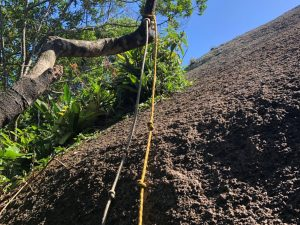 Trilha do Morro do Lampião, no Campeche 23