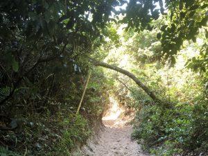 Trilha de acesso à praia do Rio Tavares