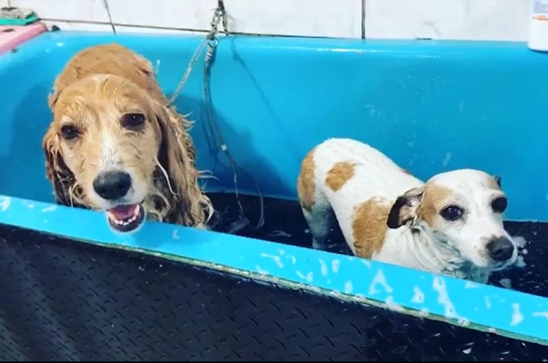 Cãopeche Banho e tosa de cães e gatos